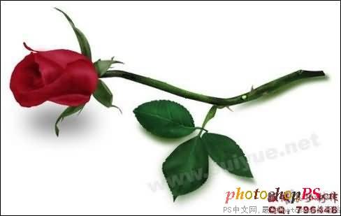 PS鼠绘情人节红玫瑰花 3