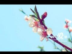 photoshop将偏暗的桃花图片调出阳光艳丽色彩