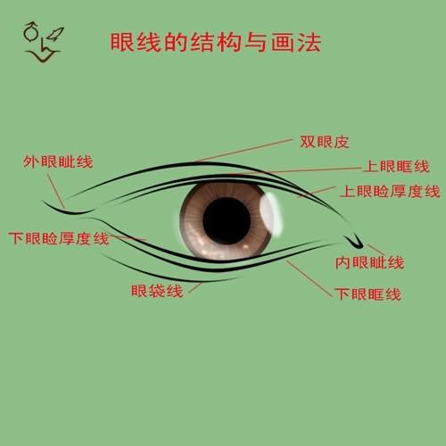 眼睛外观结构示意图 眼睛外观结构示意图高清图片 眼睛外观结构示意