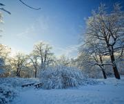 冬季白雪覆盖的树林壁纸