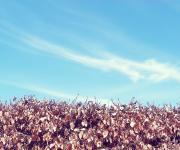 漂亮的秋季红叶和蓝天